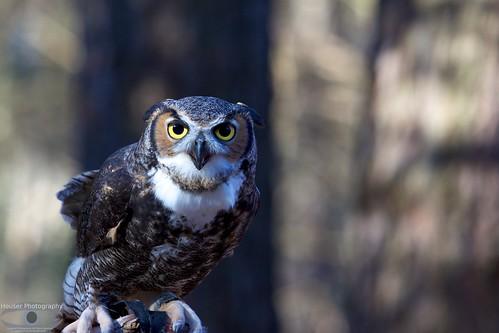 Carolina Raptor Center Owl 643
