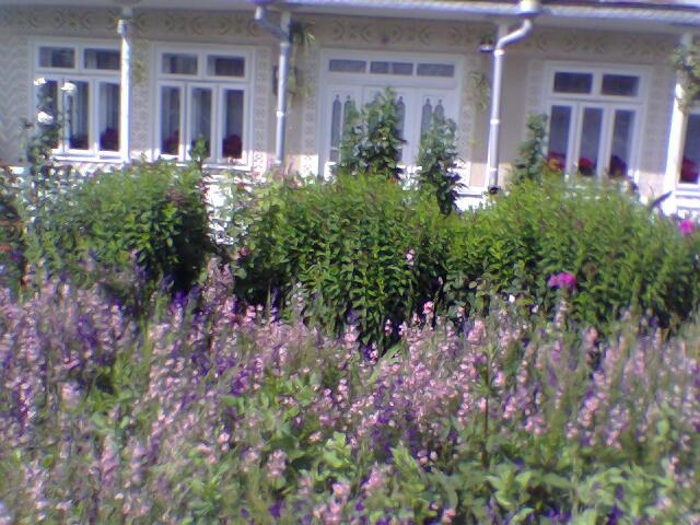 Casa, gradina, Caruntu Elena, Tataraseni