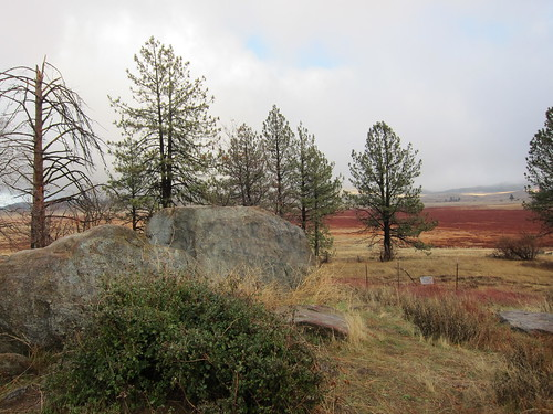 Julian, CA, pine trees, meadow IMG_9252