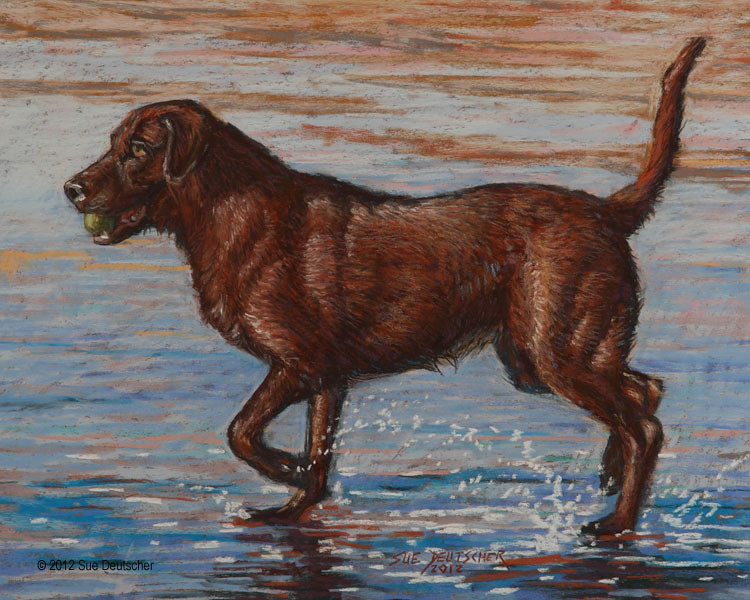 CHOCOLATE LAB PUPPIES FOR SALE IN FLORIDA  FOR SALE IN