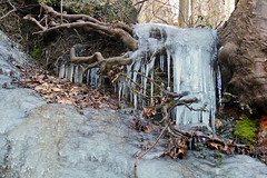 Ice and Tree