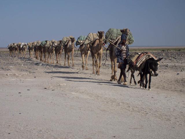 Salt-trading caravan