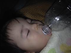 ペットボトルをくわえたまま寝るとらちゃん(2012/1/29)