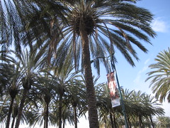 CHA Day 4: Leaving Anaheim! 6