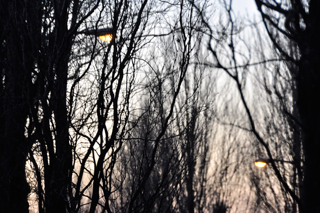 lights-through-branches