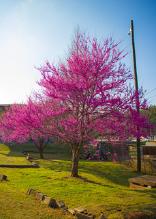 Colorful Tree in Georgia