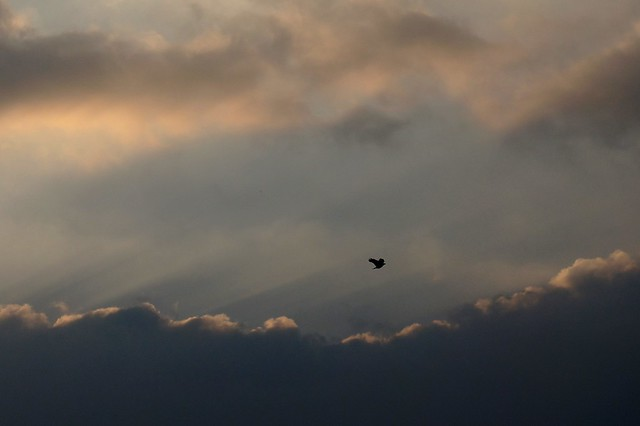 Bird and Clouds 1