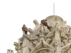CCNY Hawks (8261)