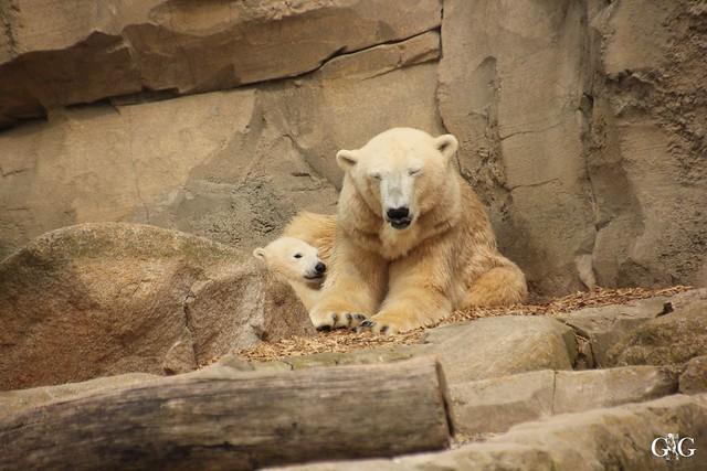 Zoo Am Meer 30.04.201637