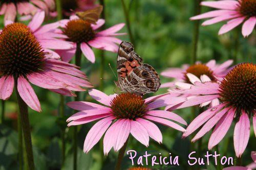 (2) Butterfly GDN.jpg
