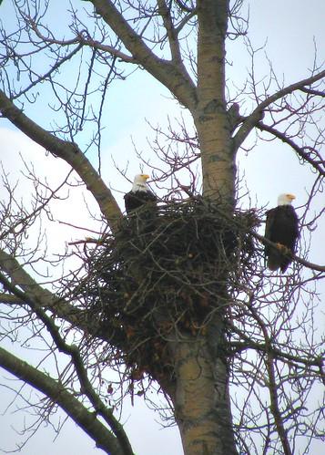 02-23-12 Nesting by roswellsgirl