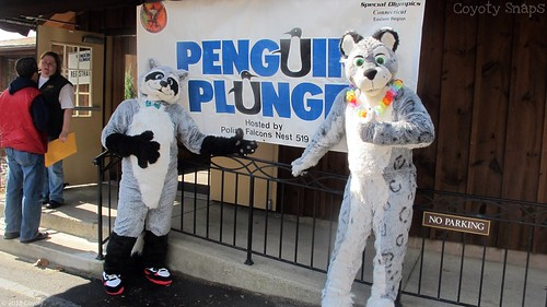Penguin Plunge 2012 by Coyoty