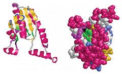Clasificación de proteínas por solubilidad