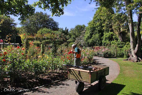 Rose Garden Invercargill Nzealand_8