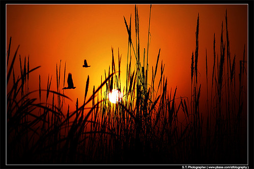 Good Morning all ( Sun Rise )India 1st March 2012