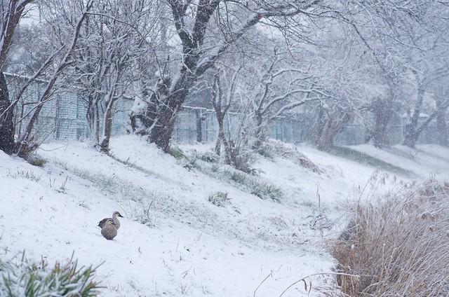 古利根雪景色 with PENTAX K-5