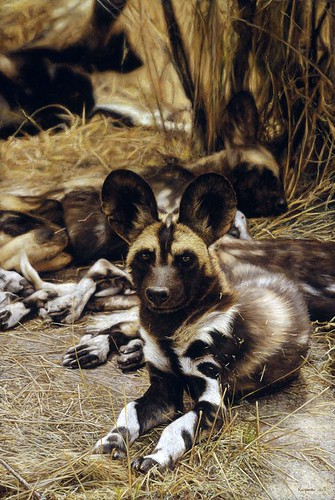 "'African Wild Dogs' oil on board 24"" x 16"