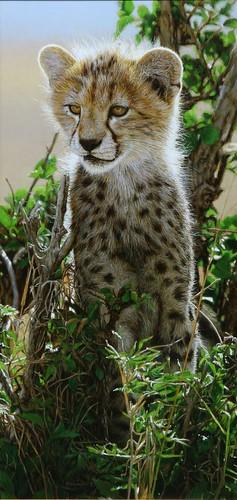 'Cheetah Cub' oil on board