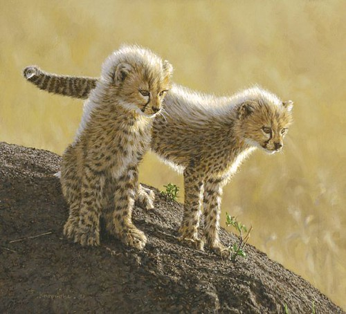 "'Playful Cubs' oil on board 8"" x 9"