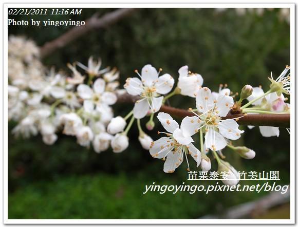 苗栗泰安_竹美山閣20110220_R0018058