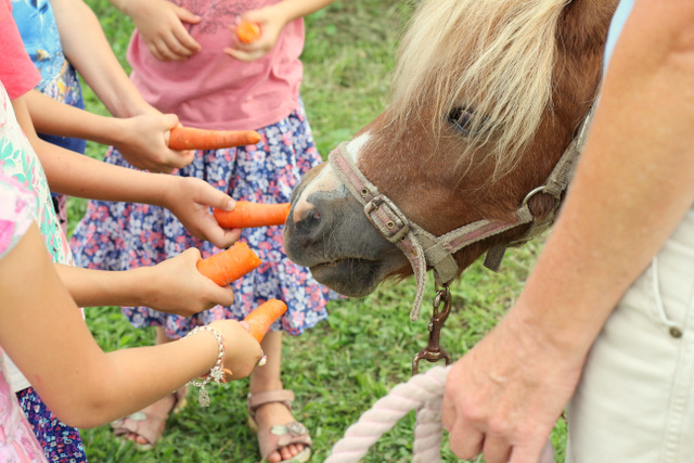 Purple Pear Organic Farm Birthday Party - Feeding the pony