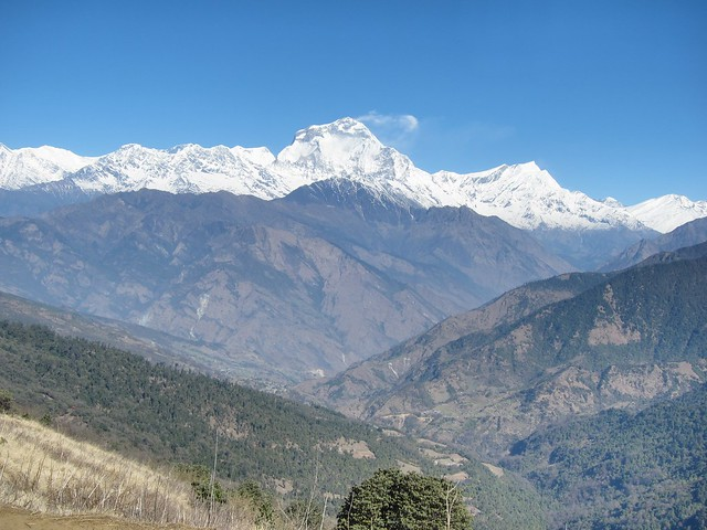 View of Dhaulagiri Mountains from Gurung Hill (Day 4)