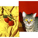Tomatoes and Cat by Thomas Albdorf