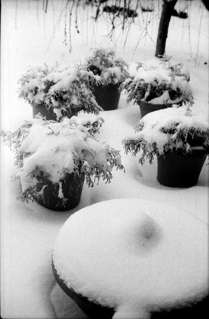 Snow Barrells