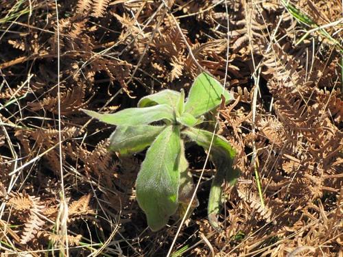 11-Campo de Educação Ambiental do Cabeço da Lenha-21.03.12