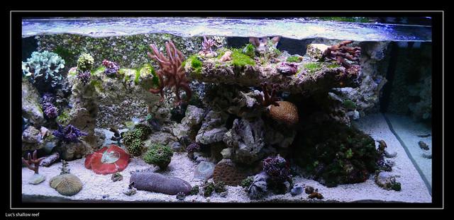 Luc's shallowreef tank 6862548043_46371fd767_z