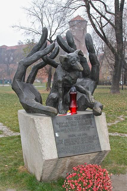 Pies Dzok, Krakow