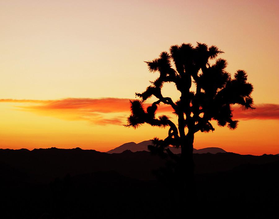 Joshua Tree Sunset 11x14