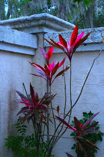 Gorgeous plant hidden behind a wall