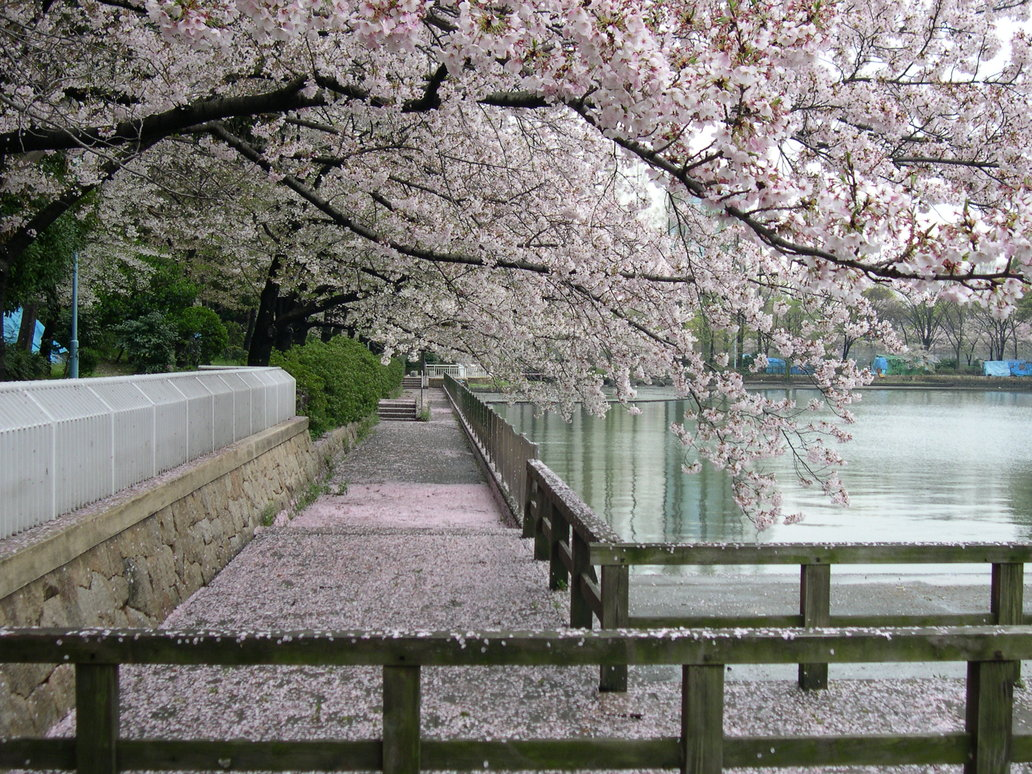 Sakura_Trees_in_a_Garden_by_dlzagnar