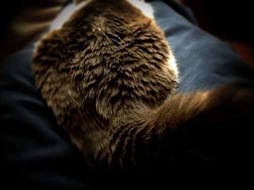 catonmylap by Nature Morte