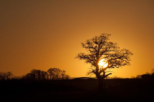 uk tree sunrise miltonkeynes unitedkingdom buckinghamshire lonely
