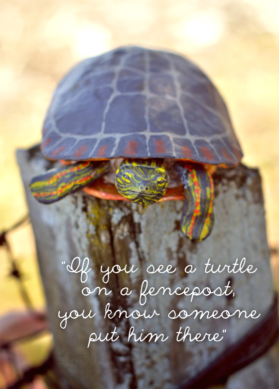 """If you see a turtle on a fencepost..."