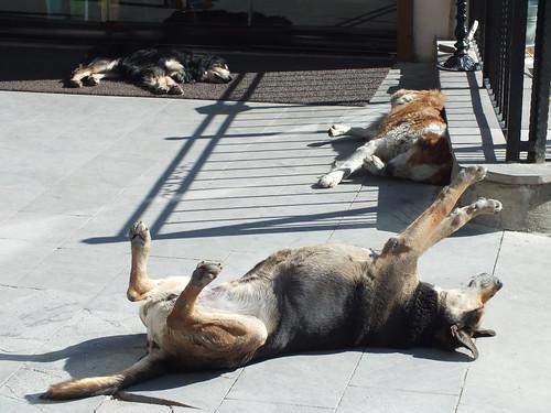 Isztambul kutyák (0-24)
