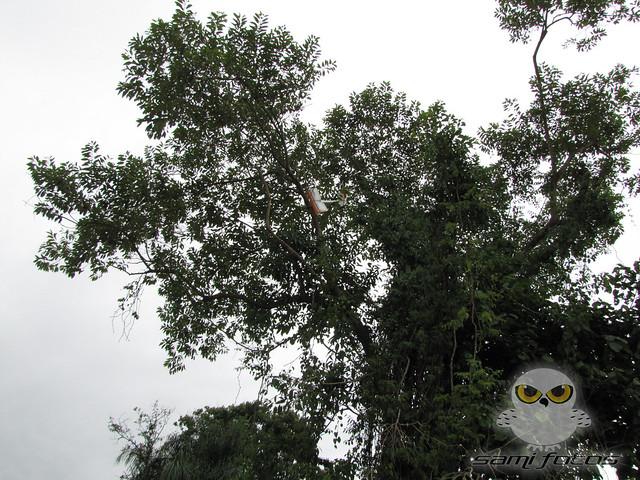 Vôos e resgate no CAAB-25/02/2012 6929133413_d3a71ffa0e_z