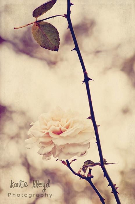 2-29-12---rose-wm