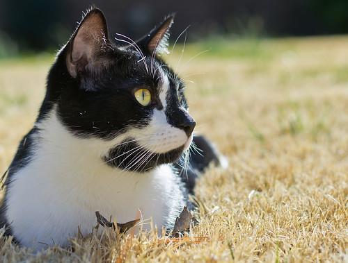 [フリー画像素材] 動物 1, 猫・ネコ ID:201203041000