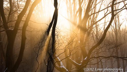 morning snow fog sunrise