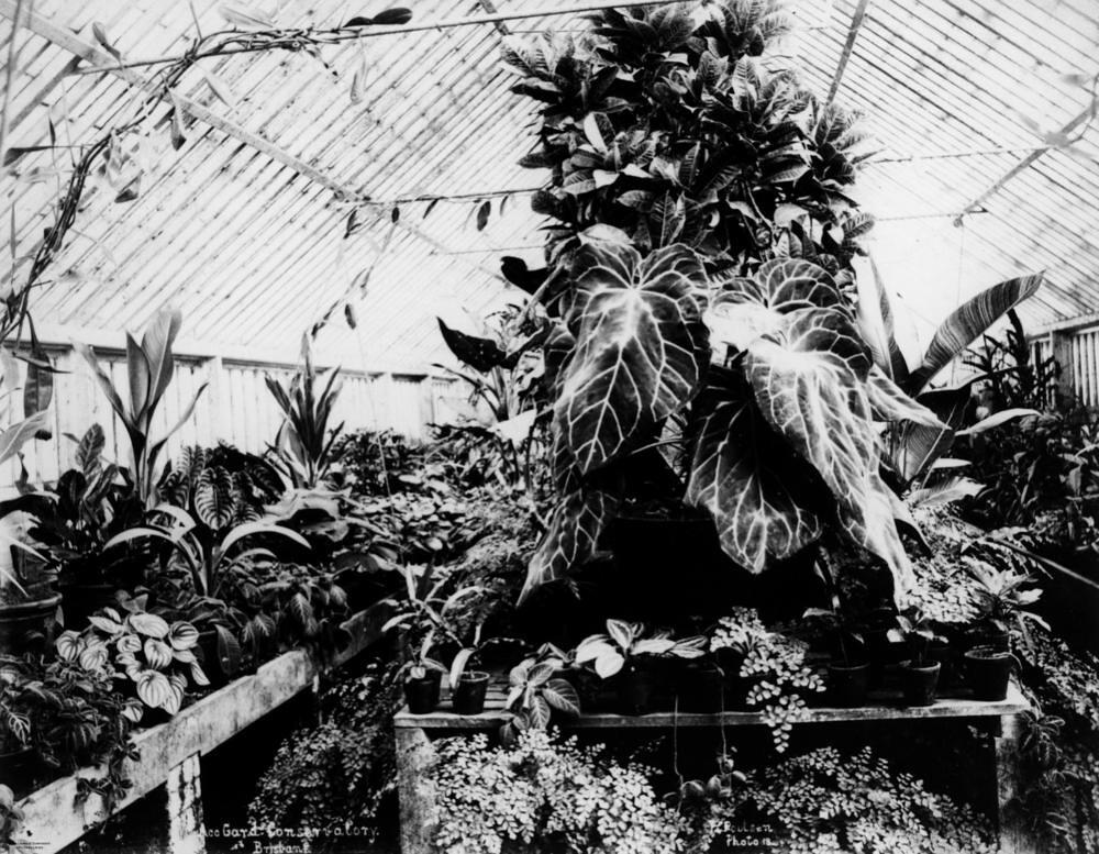 Fern-filled Conservatory at Bowen Park, Brisbane, ca. 1890
