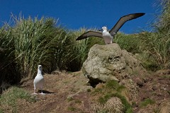 stork(0.0), pelican(0.0), booby(0.0), animal(1.0), suliformes(1.0), albatross(1.0), fauna(1.0), ciconiiformes(1.0), beak(1.0), bird(1.0), seabird(1.0), wildlife(1.0),