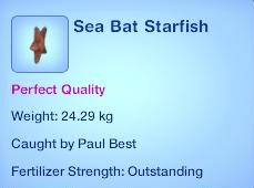 Sea Bat Starfish