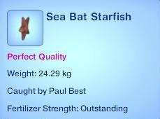 Sea Bat Starfish