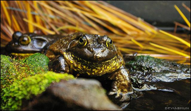 Frog - Vancouver Aquarium Flickr - Photo Sharing!