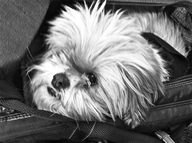 Travelin Dog Pet Seat Reviews