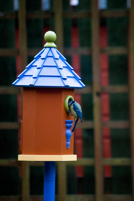 130312_ Our new bird house has a visitor no3