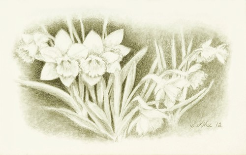 Daffodil Challenge